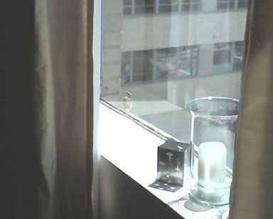 bird-on-sill